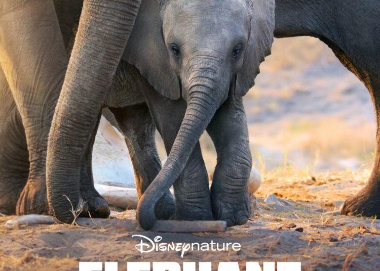 Disney Elephant